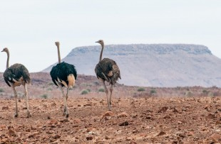 Damaraland-Nature-Drive-Harry-Ring (5)