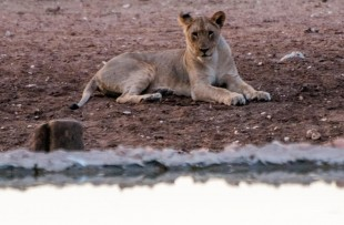 Etosha-Waterholes-Harry-Ring (1)