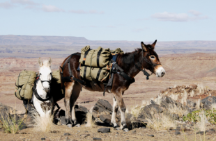 Fish-River-Canyon-Mule-Trek-DH1