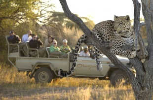 Leopard Okonjima 3