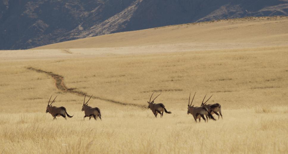 Namibrand-Nature-Drive-Wiki