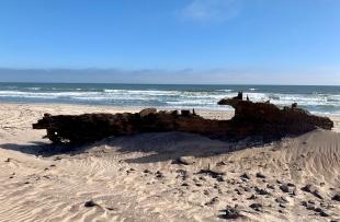 Skeleton Coast (Charlotte Bond)